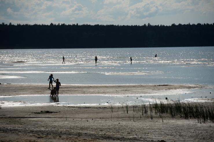 Terviseamet: Tallinna mererandu mürgine sinivetikas ei ohusta