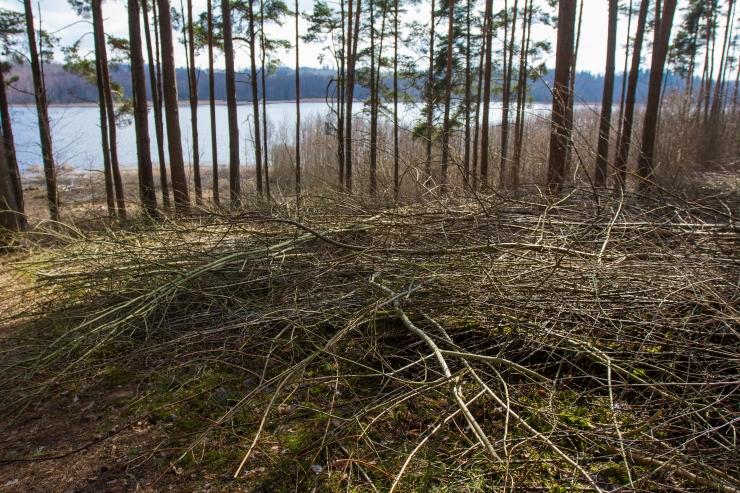 Põllumaa kokkuostjad hävitavad noori metsi