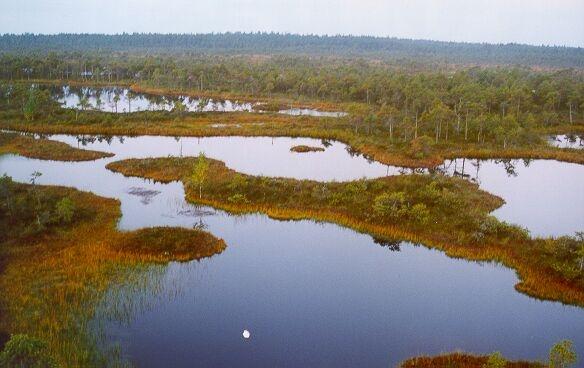 Keskkonnaamet taastab Endla looduskaitsealal märgalakompleksi