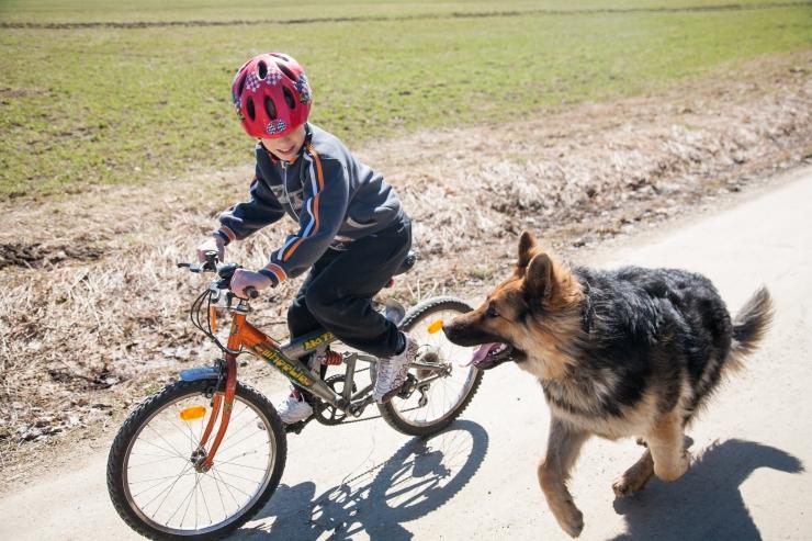 Kakumäe elanikke kimbutab vabalt jalutav koer