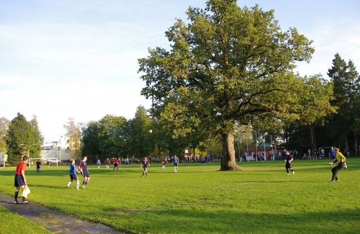 ÜLESKUTSE: Orissaare staadioni tamm Euroopa aasta puuks!