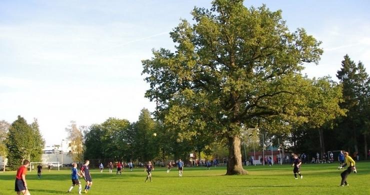 Orissaare tamm valiti Euroopa aasta puuks