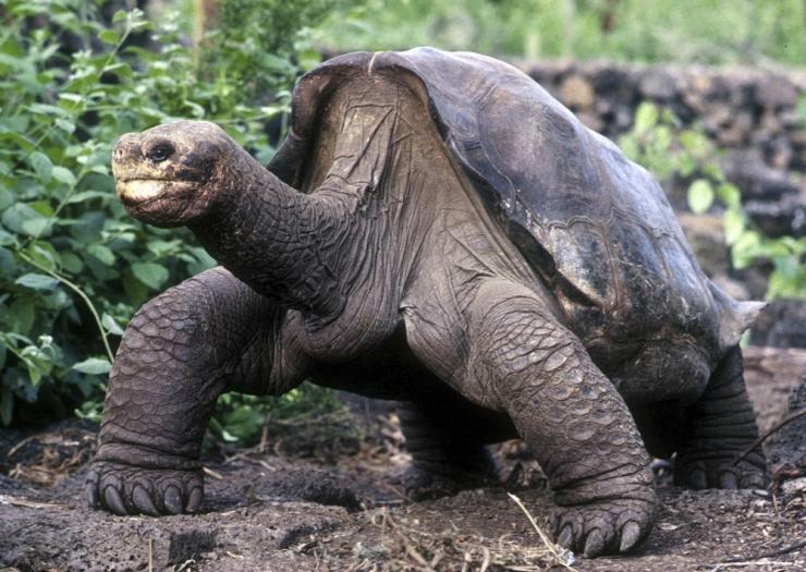 Mati Kaal jagab reisimuljeid Galapagoselt