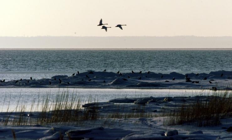 Tallinnas Paljassaare sadamas leiti uppunud mees
