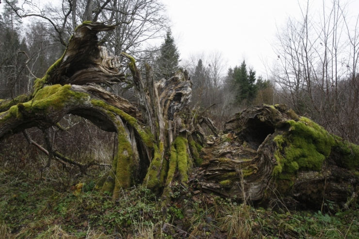 Saadikud taasasutasid riigikogus looduslike pühapaikade toetusrühma
