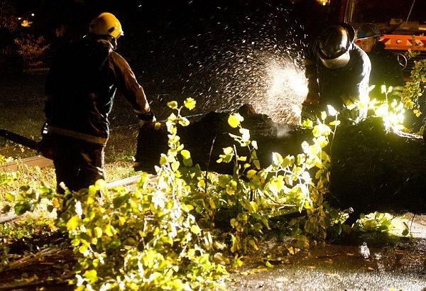 EKSPERT: Puu teeb ohtlikuks maakasutus selle ümber