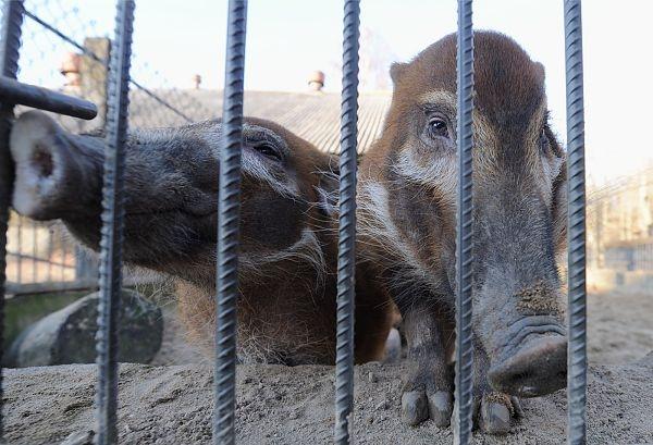 Loomaaed paigutab sead katku eest siseruumidesse