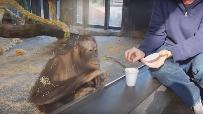 VAHVA VIDEO! Vaata, kuidas võlutrikk ahvipoisile nalja teeb!