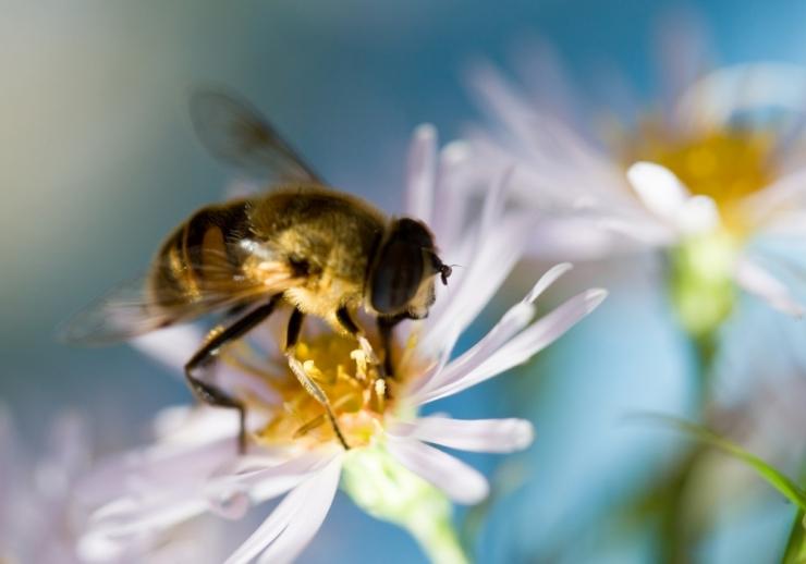 Riigikogu saadikud moodustasid mesilaste toetusrühma