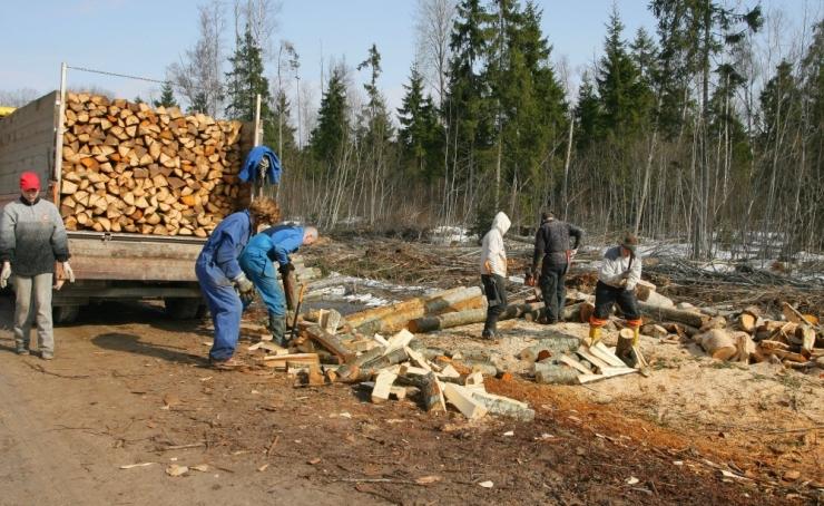 Tarmo Tamm: puidu masspõletamise asemel tuleks luua sellele lisaväärtust