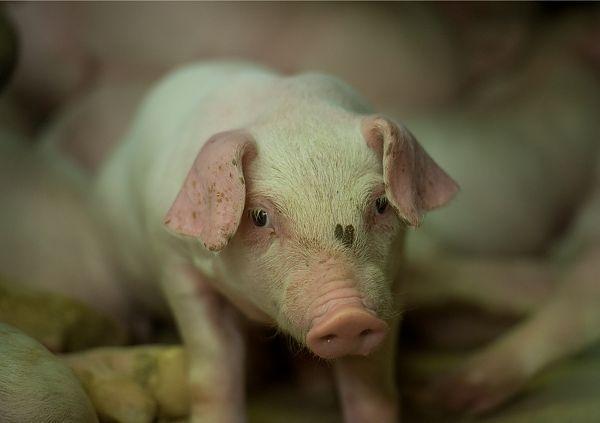 EL on valmis sigade katkust tabatud riike rohkem toetama