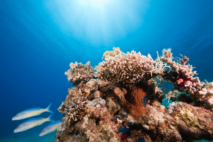 Hiiumaa lähistelt leiti arvatavaid iidseid korallriffe