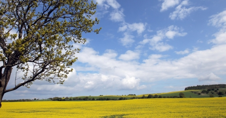 Eesti põllumajandusmaast 17 protsenti on mahemaa