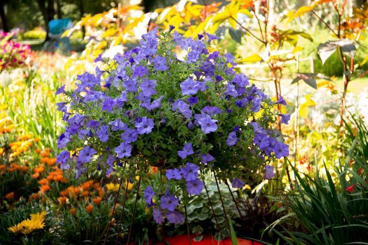 Teisipäeval hakkavad maastikukujundajad Tornide väljakul lillefestivali teemaaedu rajama