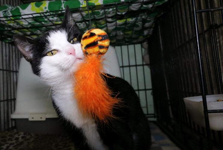 Kodutute loomade varjupaiga teenuse pakkujaks Tallinnas saab Varjupaikade MTÜ