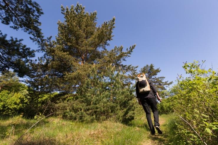 Ebavere kaitseala ja Naissaare looduspark saavad uue kaitse-eeskirja