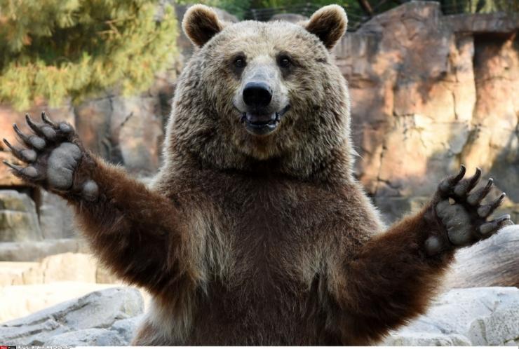 Ministeerium ei lubanud Harjumaal täiendavalt kolme karu küttida