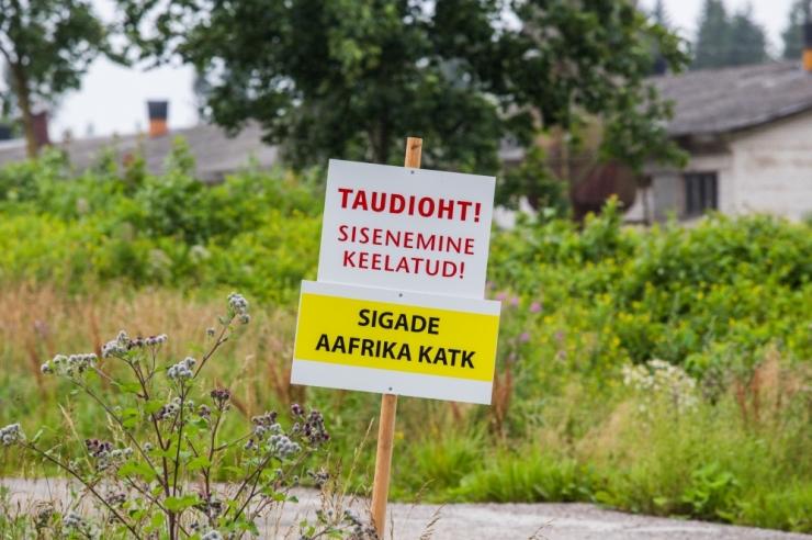 VTA hüvitab Saaremaal seakatkuga nakatunud farmile 226 000 eurot