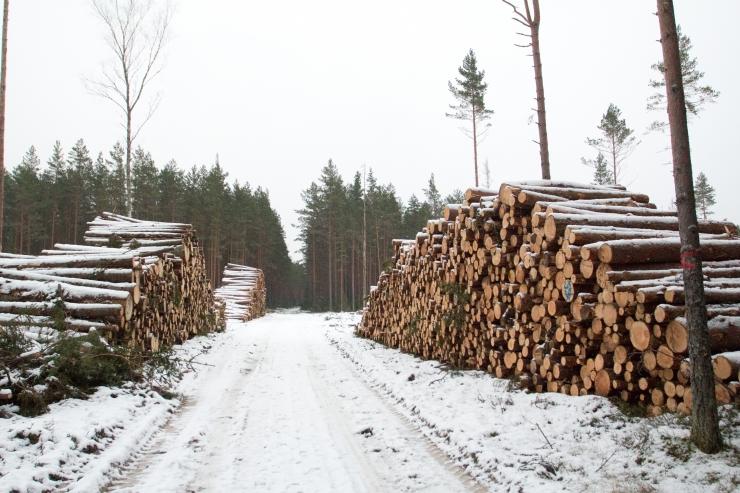 Tartu teadlased: keskkonnaministeerium varjab mittesäästlikku metsaraiet