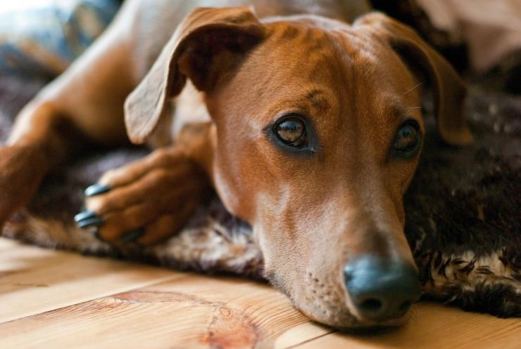Heiki Valner: aastavahetuse saluudid on lemmikloomadele iga-aastane probleem