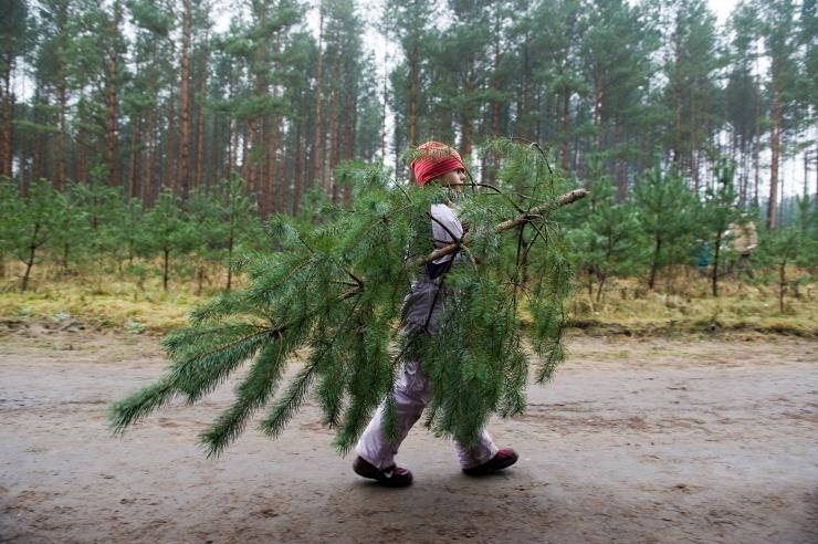 Jõulukuuskede kokkukogumine on Tallinnas juba alanud