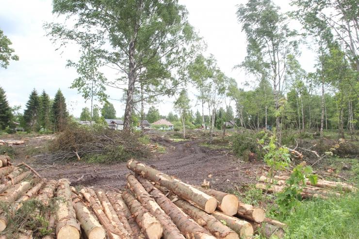 Turismiettevõtjad: metsapoliitika ei arvesta turismi vajadustega