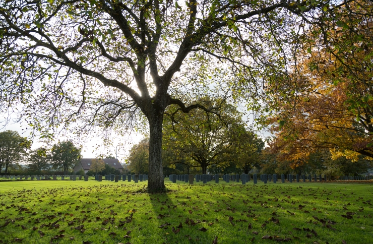Lugeja küsib abilinnapealt: kas ma võin ohtliku puu ise maha raiuda?
