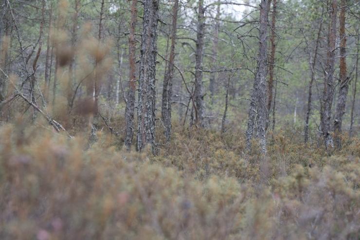 Eestis pannakse paika kliimapoliitika pikaajaline siht