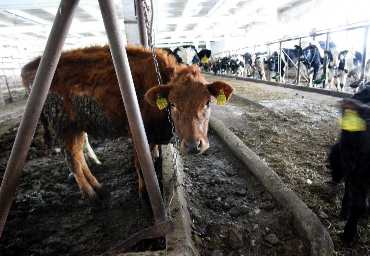 Farm In ehitab 7,8-miljonilise rapsitehase Mõhküla asemel Imaverre