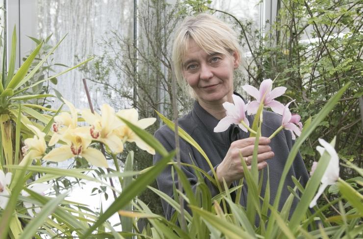 AEDNIK: Tallinna botaanikaaed hoiab elus haruldasi vanaaegseid orhideesorte