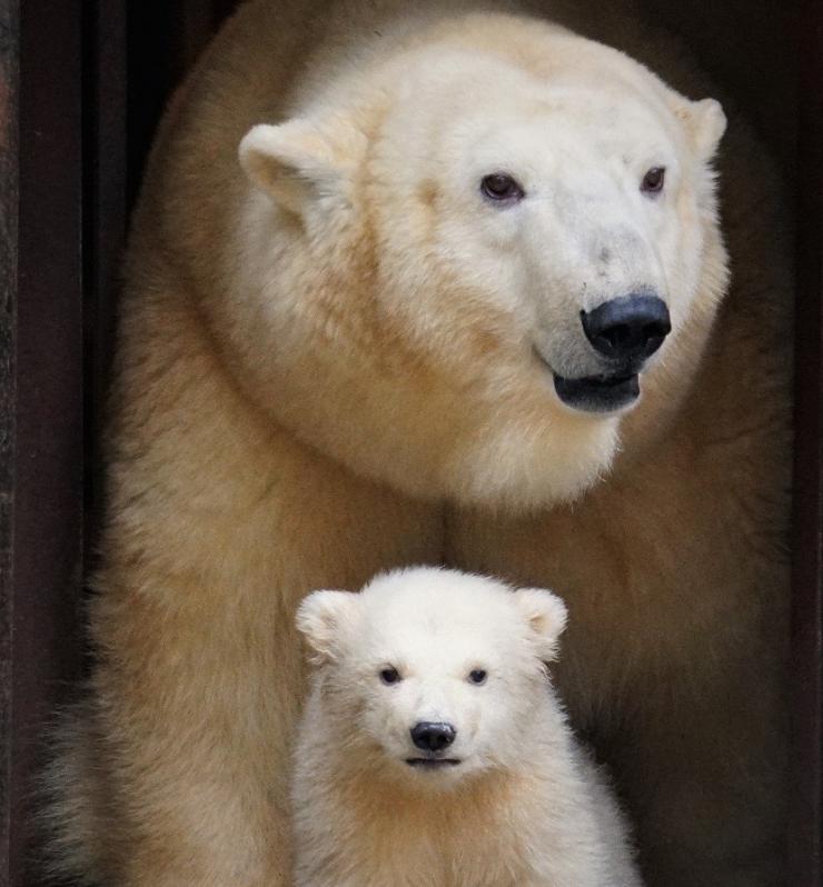Aita äsjasündinud jääkarumõmmile nime leida!