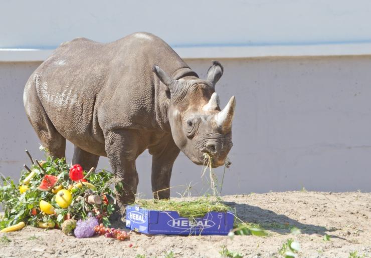 Maran: ka Tallinna loomaaia ninasarvikuid tuleb ohtude eest kaitsta