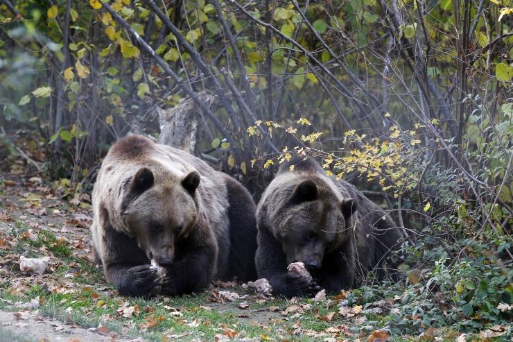 Amet hoiatab talveunest ärganud näljaste karude eest