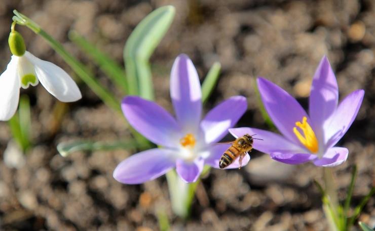 Kevadist koolivaheaega aitavad sisustada põnevad laagrid ja üritused