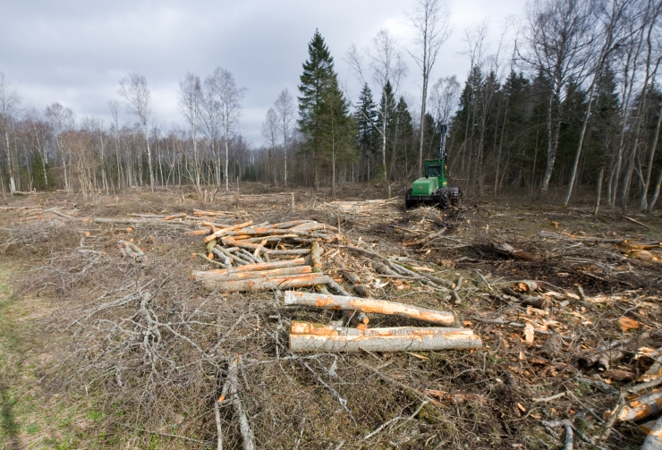 Metsaekspert Tarmo Tüür: metsapoliitika on säästva metsanduse kursilt eemaldunud
