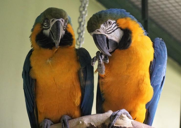 Loomaaed tähistab rahvusvahelist hülgepäeva
