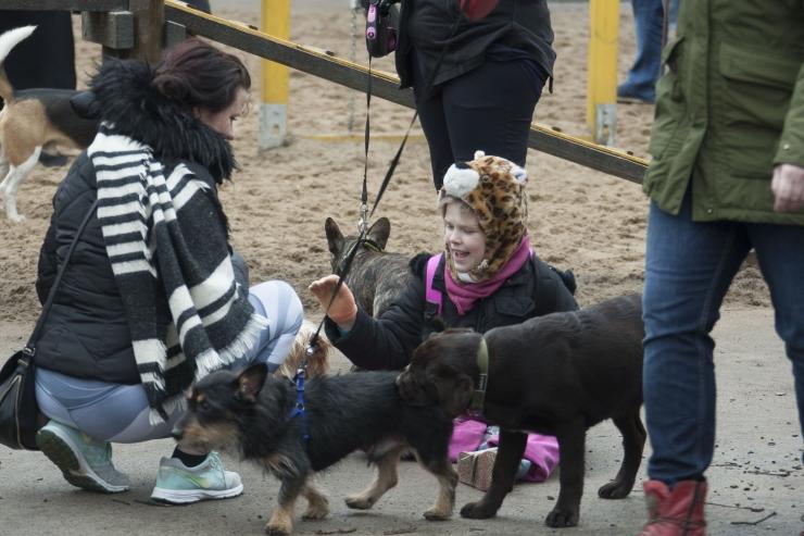 FOTOD! Tallinna esimene koerte piknik pakkus lõbusat meelelahutust