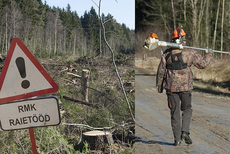 METS KATLA ALLA: Aplad Narva elektrijaamad ähvardavad Eestimaa metsast lagedaks raiuda