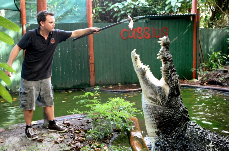 Austraalias surmas krokodill kalamehe
