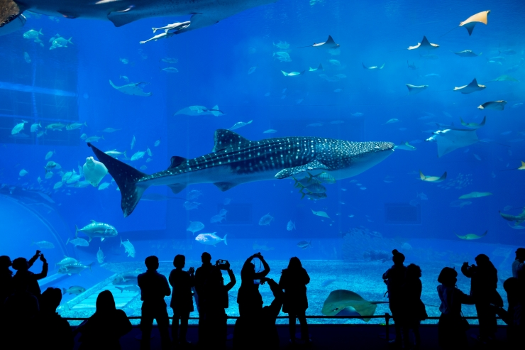 Okeanaariumi rajamise vastastel petitsioonil on juba 3500 allkirja