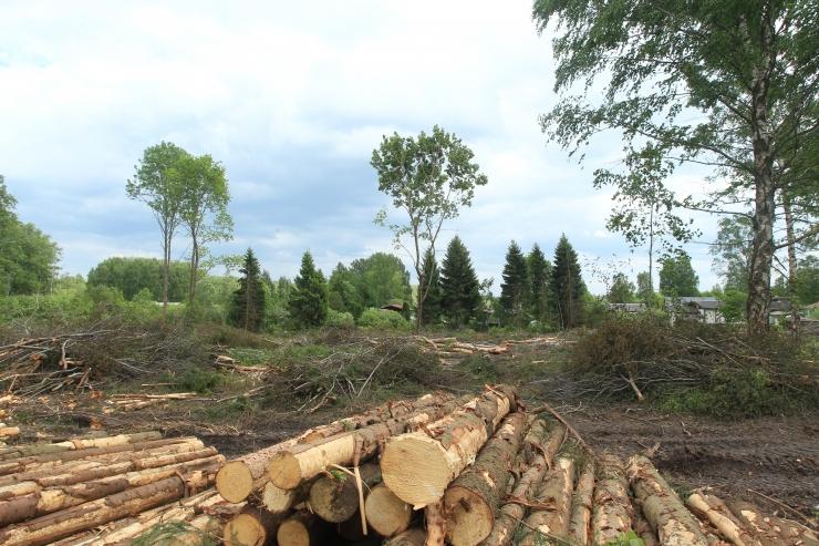 Artur Talvik: metsa asemel näeme aina rohkem kännuväljakuid