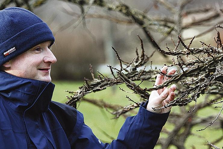 Botaanikaaed õpetab õigesti õunapuude eest hoolitsema