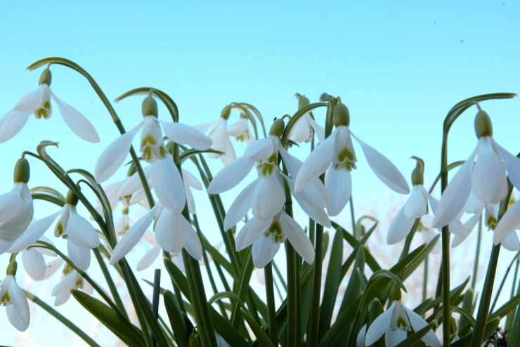 Märts kujunes paljude aastate keskmisest soojemaks