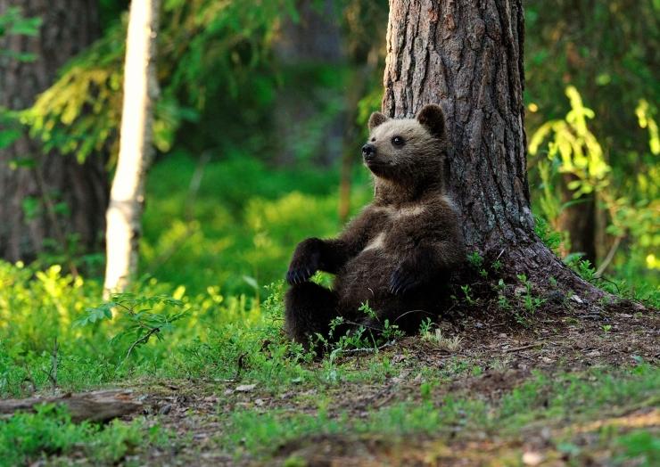 Looduskaitsjad: umbes 10 000 puuliiki on väljasuremisohus