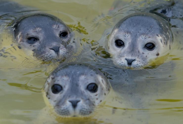 Loomakaitsjad: rannal pikutavad hülgepojad ei vaja inimese abi