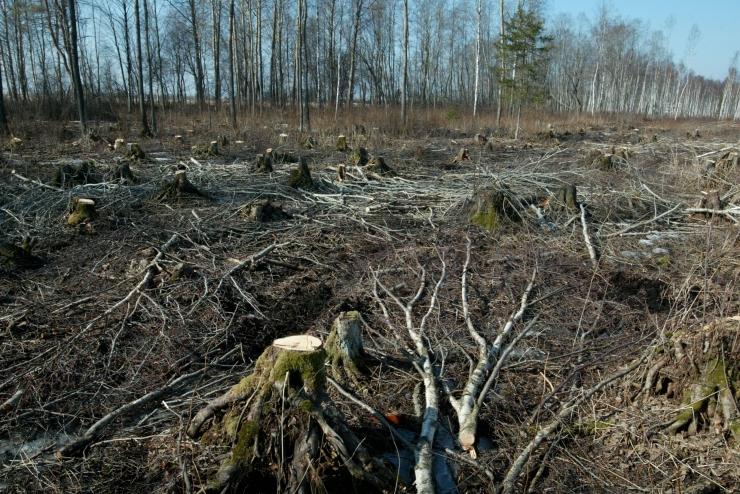Ökoloog ja metsateadlane Toomas Frey riigikogus: meie metsanduse olukord on keeruline ja murettekitav