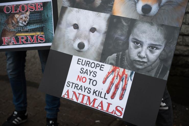 FOTOD ja VIDEO! Anita Jürson: me oleme karusloomafarmide keelustamisele lähemal kui kunagi varem!