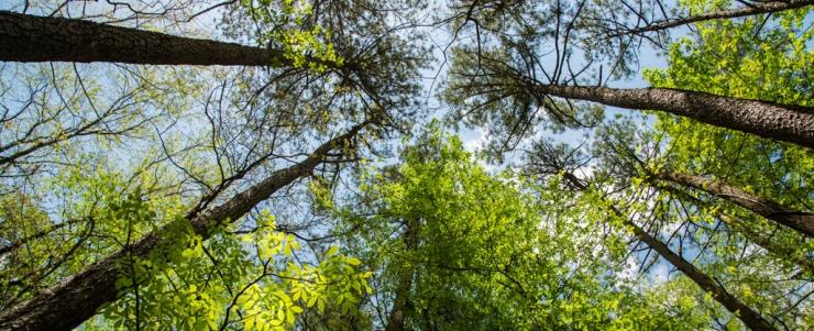 Uuring: Eesti metsa juurdekasv on stabiilne