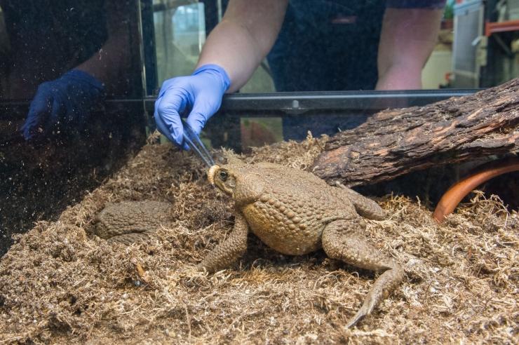 FOTOD! Loomaaias tähistati vahvat konnapäeva