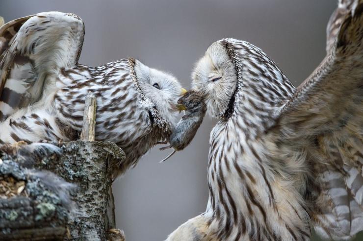 GALERII JA VIDEO! Vaata Looduse Aasta Foto konkursi parimaid pilte!
